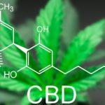 Was Ist CBD: Alles Über Das Cannabinoid Cannabidiol