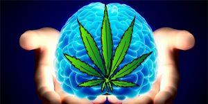 THC im Körper