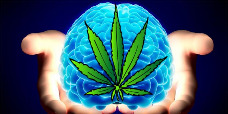 THC im Körper und im Gehirn