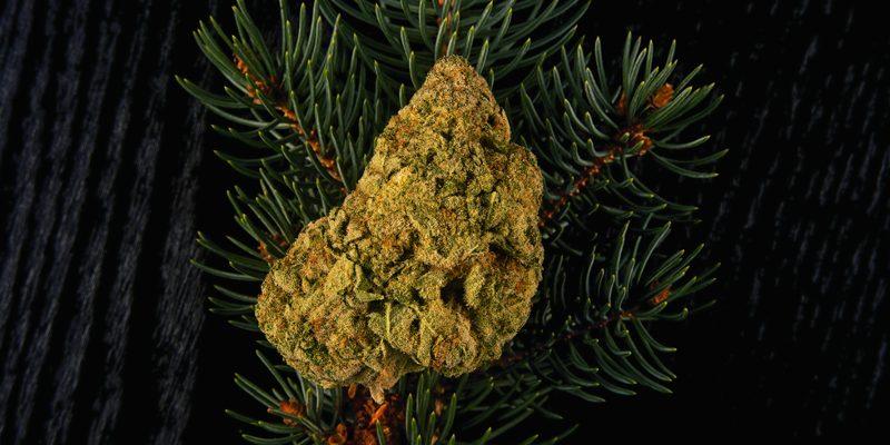 Terpene in der Cannabispflanze