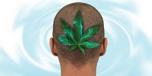 Wirkspektrum von Cannabis