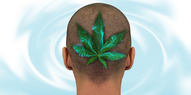 Cannabis Und Dessen Wirkspektrum Auf Den Menschen