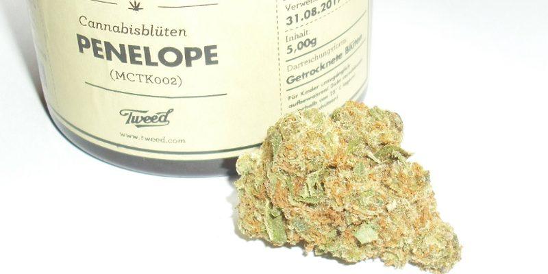 CBD Skunk Haze Cannabisblüten