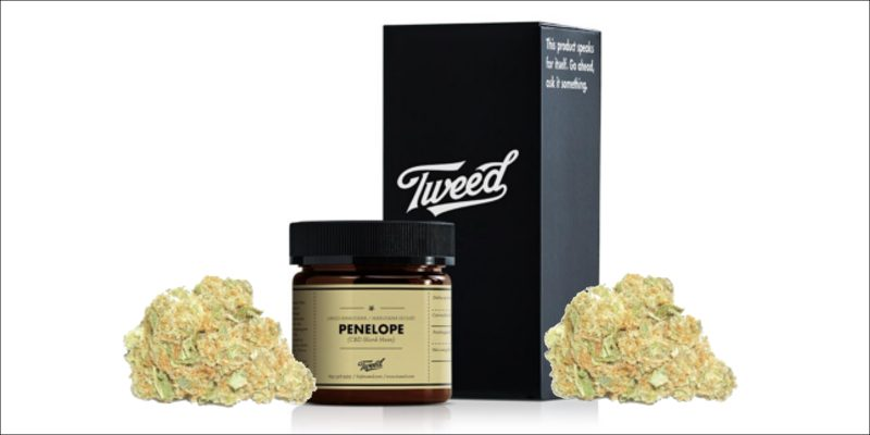 Penelope CBD Skunk Haze von Tweed