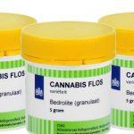 Bedrolite Von Bedrocan: Cannabis Sativa L. Resina Strain Review