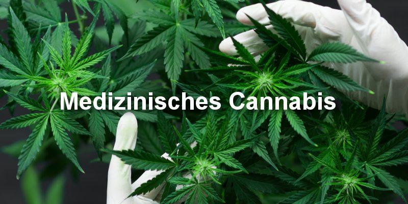 Medizinisches Cannabis Sorten Übersicht