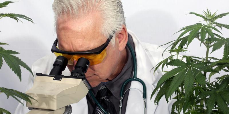 cannabis in der wissenschaft