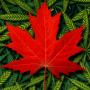 Cannabis In Kanada Komplett Legalisiert!