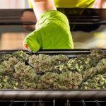 CannabisDecarboxylierung: Alles Was Man Wissen Muss