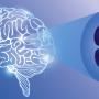 Das Endocannabinoid System (ECS) Im Menschlichen Körper