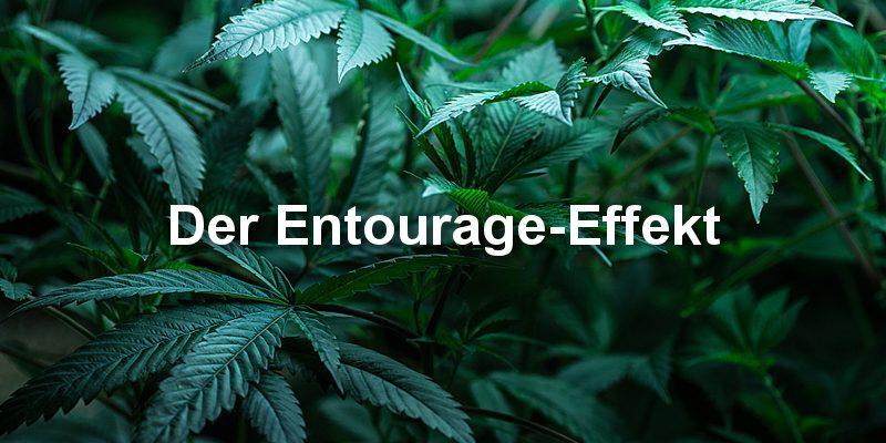 entourage effekt