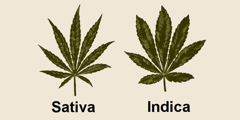 Cannabis Indica und Sativa