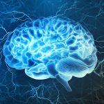 Studie: Cannabis kehrt Alterungsprozesse Im Gehirn um