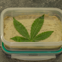 Extraktion: Slow Cooker Cannabis Butter Herstellen