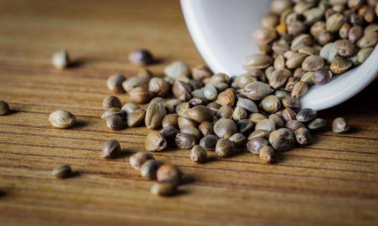 Gesunde Cannabis Samen