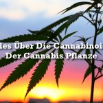 Cannabinoide In Cannabis: Der Ultimative Guide