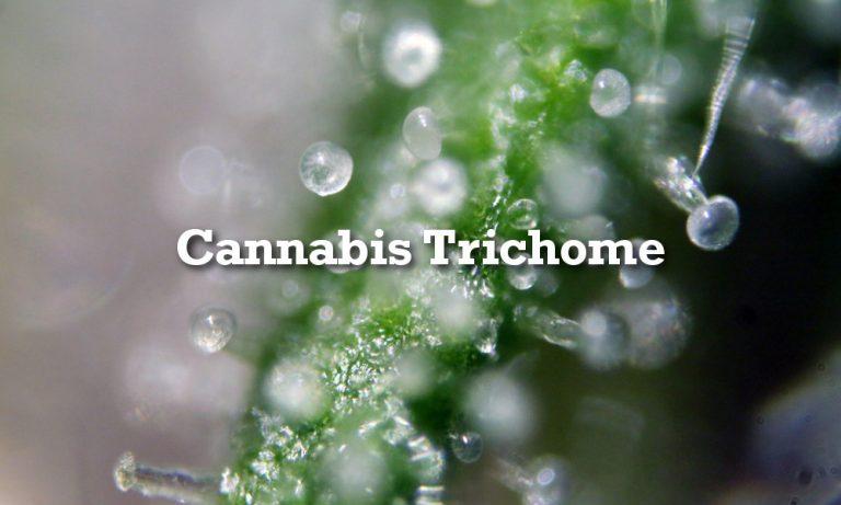 Alles Über Cannabis Trichome: Entstehung & Ernte