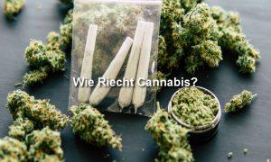 Cannabis und Joints auf Tisch