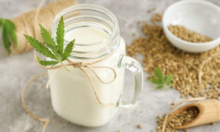 Hanfmilch aus Hanfsamen